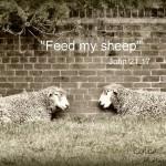 Feed my sheep di Catcher In My Eye, su Flickr