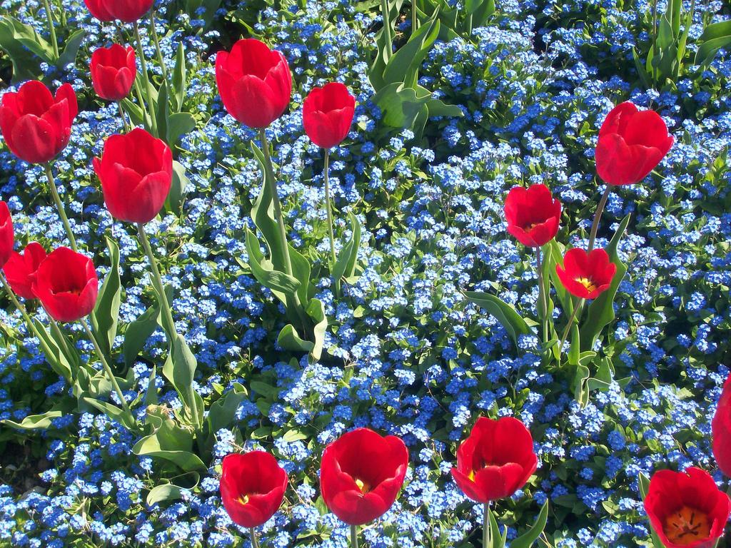 Parrocchia di san benedetto fioritura di tulipani e nontiscordardim al parco giardino - Parco giardino sigurta valeggio sul mincio vr ...