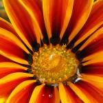 anche i fiori sudano di Simpio96, su Flickr